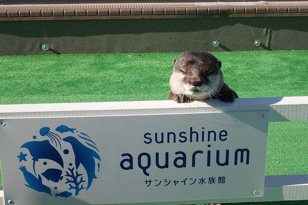 「サンシャイン水族館」のアピール中だけど…眠い…。