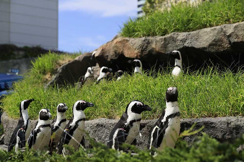 『ペンギン』たちは、一体何を見ているのか…。