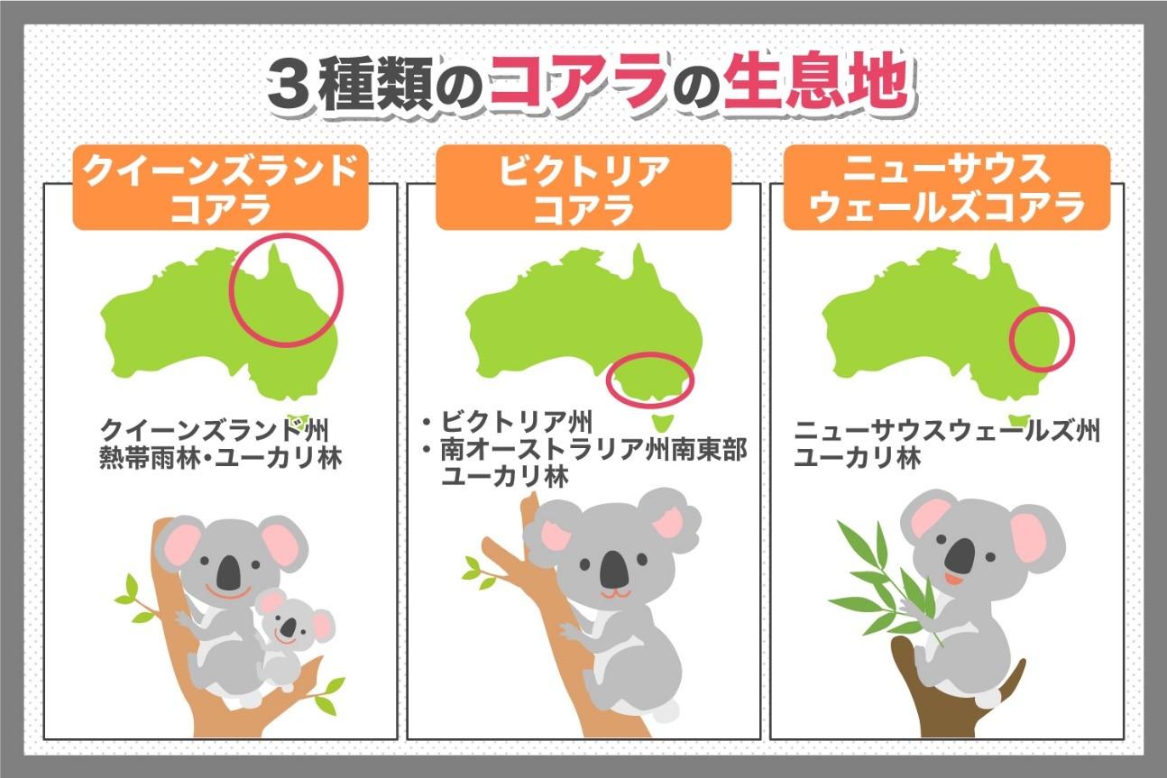 3種類のコアラの生息地
