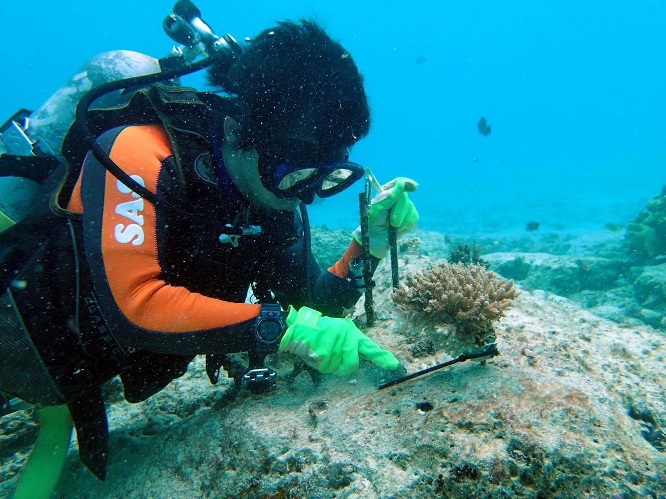 沖縄の海での活動の様子