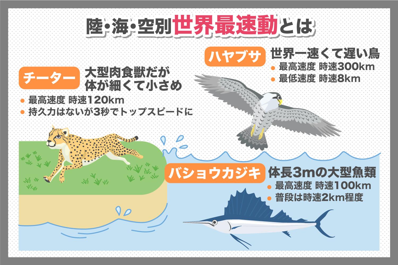 ランキングトップの生きものは!?陸海空に分けて世界最速動物をご紹介